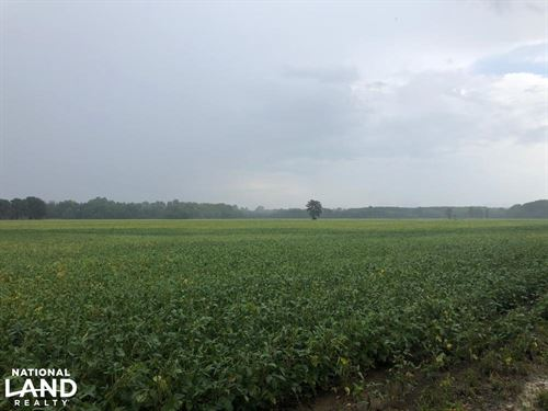 Tallahatchie River Farmland : Myrtle : Union County : Mississippi