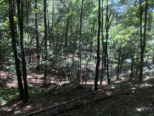 Habersham County Timber Tract : Demorest : Habersham County : Georgia
