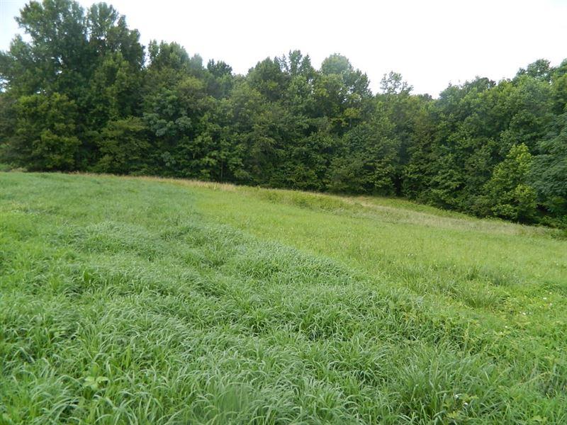 Beautiful Fenced Pasture With Creek : Stephens : Oglethorpe County : Georgia