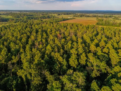 Live Timberland Auction-378 Acres : Dutton : Jackson County : Alabama
