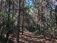 18 Acres of Trees With a Creek : Nacogdoches : Nacogdoches County : Texas