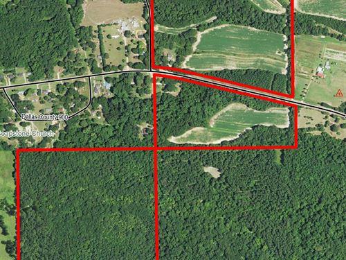 Farmland Hunting Land & Timberland : Polk : Dallas County : Alabama