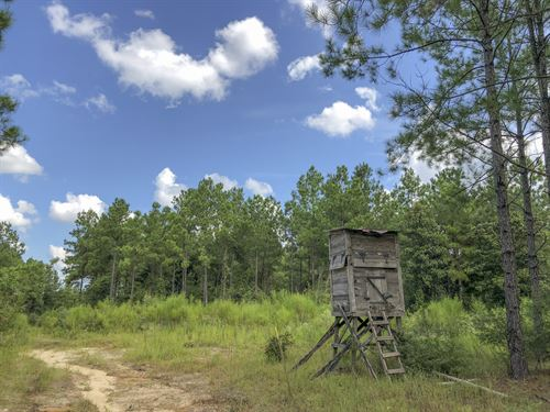 370 Ac Falcon : Hillister : Tyler County : Texas