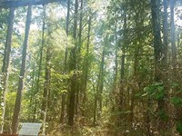 15 Acre Timber Land Kiamichi : Moyers : Pushmataha County : Oklahoma
