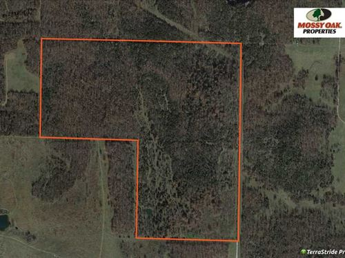 Timber Tract in Ash Grove, Missouri : Ash Grove : Greene County : Missouri