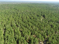 263.6 Acres Planted Pines, Wooded : Girard : Burke County : Georgia
