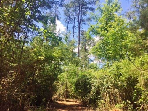 20 Acres Rural Land For Sale In Sw : McComb : Pike County : Mississippi