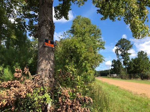 Beautiful Small Tract Ready For You : Centreville : Wilkinson County : Mississippi