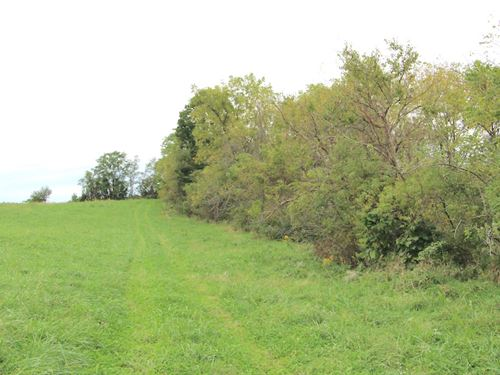 Workman Rd, 20 Acres : Mt Perry : Muskingum County : Ohio
