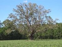 97 Acres of Farm And Timber Land : Chadbourn : Columbus County : North Carolina