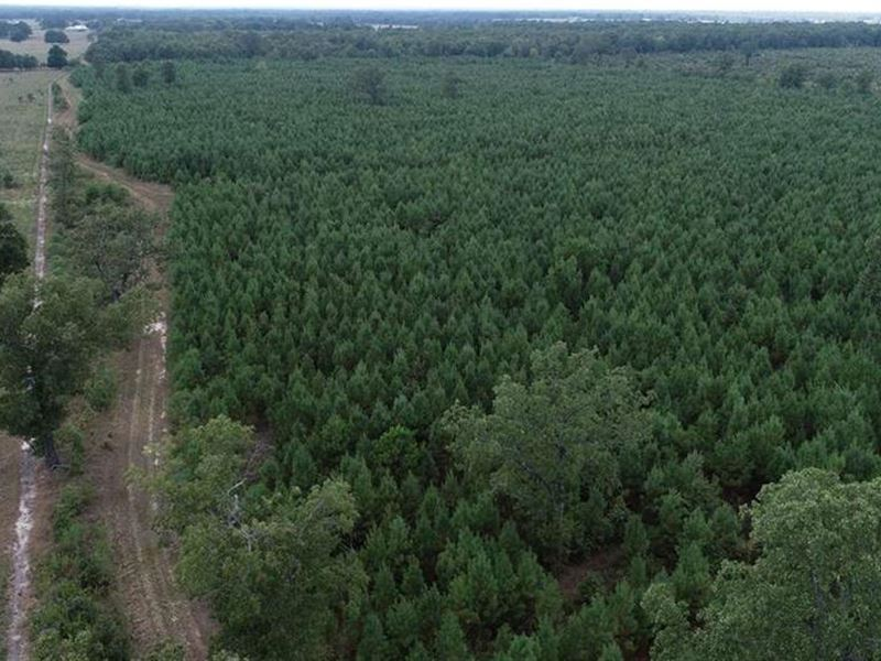 Wooded Hunting Land : Ranch for Sale : Detroit : Red River County : Texas