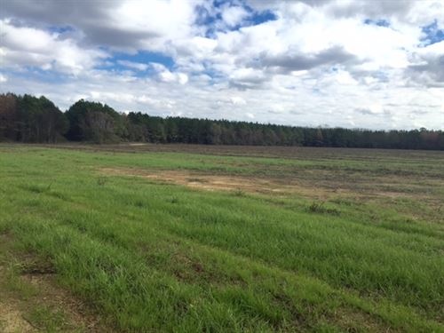 Timber & Ag, Hunting + Investment : Americus : Sumter County : Georgia