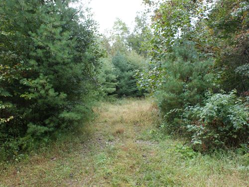 13 Wooded Acres, Awesome Hunting : Troutdale : Grayson County : Virginia