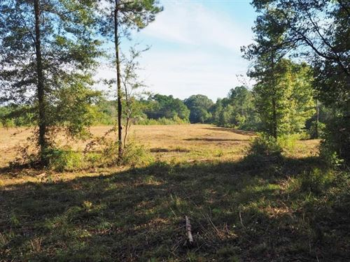 10 Acres Rolling Hills Land For Sal : McComb : Pike County : Mississippi