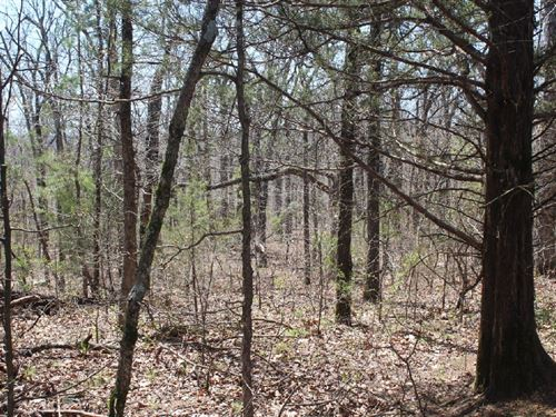 80 Acres Power, Water, & Septic : Mountain View : Stone County : Arkansas
