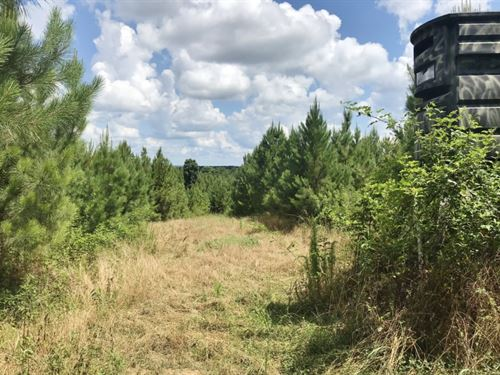 420 Acres South MS Hunting Land : Roxie : Franklin County : Mississippi
