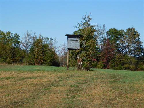TN Deer Duck Hunting Land, Food : Michie : McNairy County : Tennessee