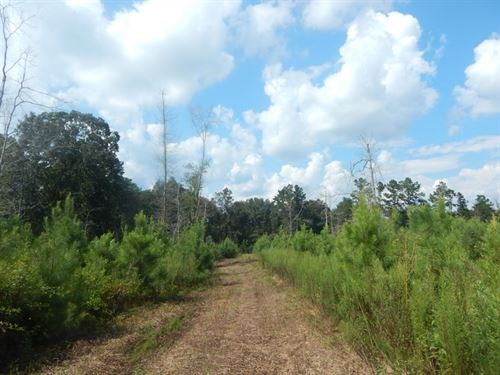 15.64 Acres Timberland With Great : McComb : Pike County : Mississippi