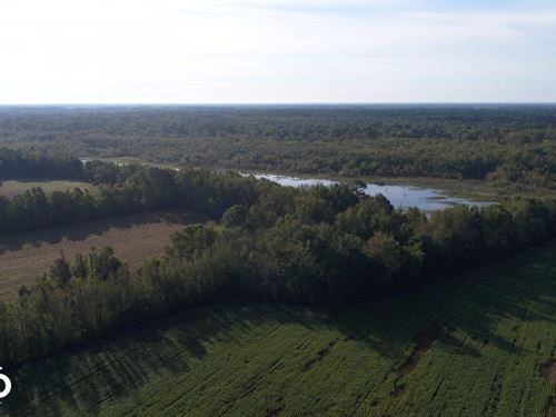 210 Highway Hunting Farm : Smithfield : Johnston County : North Carolina