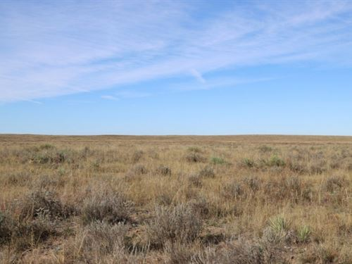 Brown, Yuma, Pasture Land Auction : Yuma : Colorado