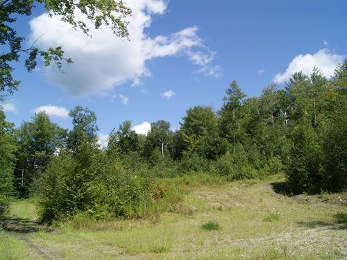 Isham Forest : Gilsum : Cheshire County : New Hampshire