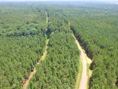 938 Acres Hardwood And Pine Timber : Ripley : Tippah County : Mississippi
