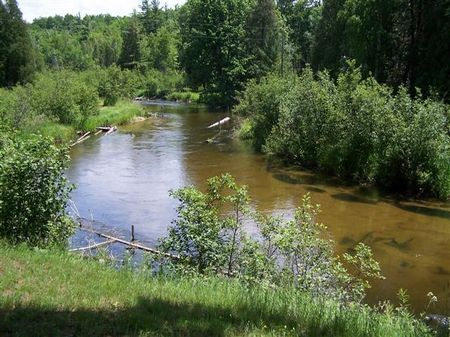 Little Manistee River Cabin : Manistee : Michigan