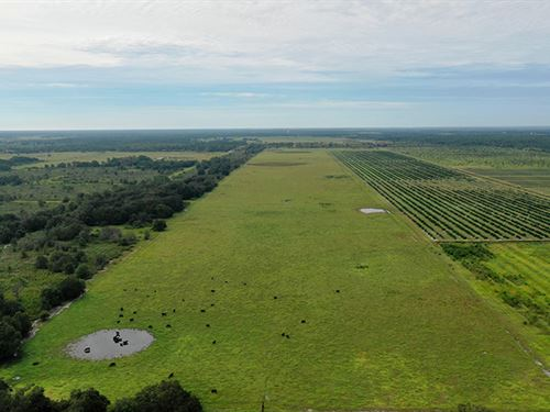 Sinkhole Road Pasture : Bartow : Polk County : Florida