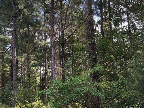 Pine Timberland, Creek Drain : Chidester : Ouachita County : Arkansas