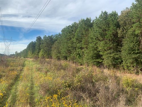 Pine Timberland Hunting Land Union : Strong : Union County : Arkansas
