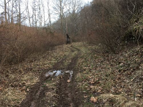 Flat Area Is Great Place To Build : Wallback : Clay County : West Virginia