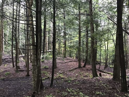 Potter Woods : West Munroe : Oswego County : New York