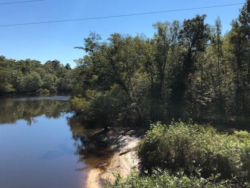 55 Acres Timber Hwy 119 Bulloch : Brooklet : Bulloch County : Georgia