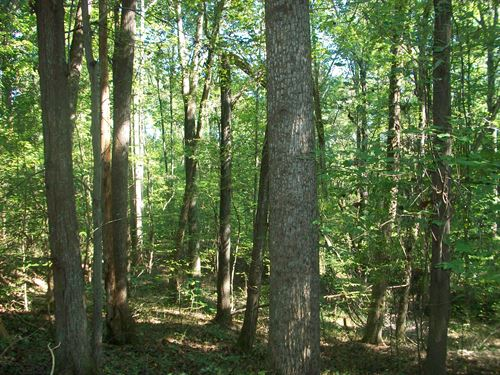 50+/- Acres Reeves Mill Rd : Sutherlin : Pittsylvania County : Virginia
