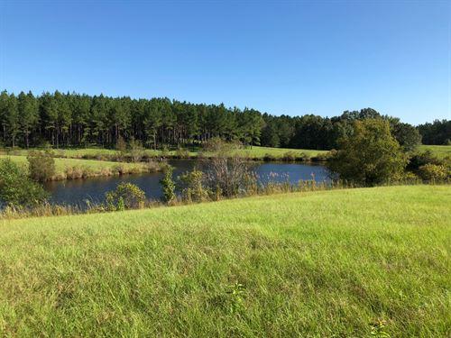 Gobblers And Big Bucks : Pattison : Claiborne County : Mississippi