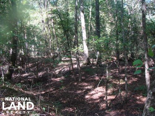 40 Acres Timber And Hunting Trac : Prescott : Nevada County : Arkansas