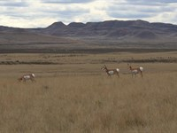 Butcher Ranch 1,035+/- Deeded Acres : Gillette : Campbell County : Wyoming