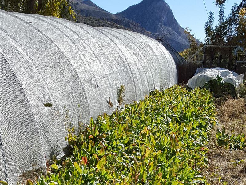 Scenic Rainbow Canyon Organic Farm : Caliente : Lincoln County : Nevada