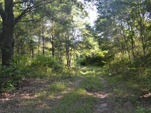 Bellamys Tract 1 : Swainsboro : Emanuel County : Georgia