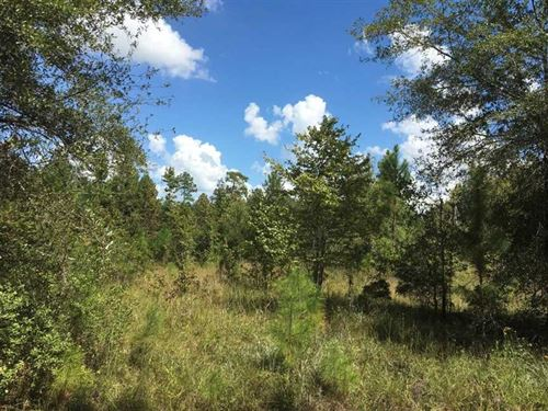 25.84 Acres Land For Sale in Camde : White Oak : Camden County : Georgia