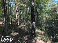 30 Acres on Scotland Rd, Near Winon : Winona : Montgomery County : Mississippi