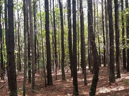 20+/-Acres Nice Wooded / Branch : South Pittsburg : Marion County : Tennessee