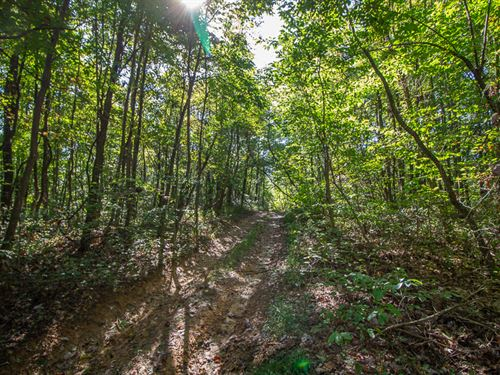 Maxwell Hollow Rd, 119 Acres : McArthur : Vinton County : Ohio