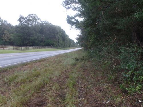 36 Ac, Timberland For Rural Home : Woodville : Tyler County : Texas