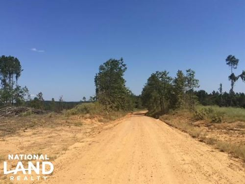 Freshly Harvested Timber Land : Gore Springs : Grenada County : Mississippi