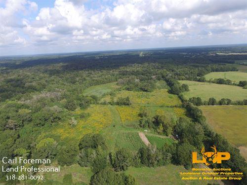 36 Acres Evangeline Parish : Ville Platte : Evangeline Parish : Louisiana