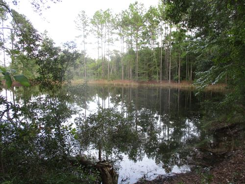 49+ Acres Loblolly Pine Tract : Blackshear : Pierce County : Georgia