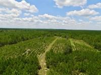 51 Acre Pine Wood Tract : Millen : Jenkins County : Georgia