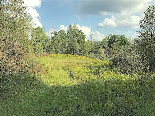 Morganstern Ln Lot 4, 67 Acres : Beverly : Morgan County : Ohio