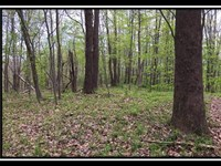 Buck Mountain : Ironton : Lawrence County : Ohio